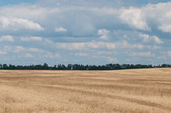 Wheat landscape-2 royalty free stock photography