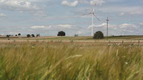 Wheat landscape with wind turbines stock video
