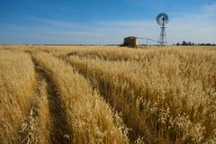 Wheat landscape and windmill Royalty Free Stock Photos