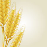 Wheat on light background Stock Image