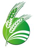 Wheat logo Stock Images