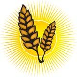 Wheat logo. Illustration art of a sunrise wheat logo with isolated background royalty free illustration