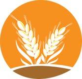 Wheat. For logo concept has been created as vector Stock Photos