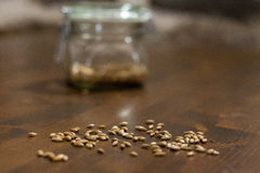 Wheat malt grains. Malt grains in a foreground and a buckled glass of wheat malt in the blurred background Royalty Free Stock Photography