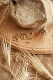 Wheat & Meal Stock Photo