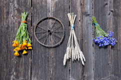 Wheat and medical herbs bunch on old wooden wall Stock Photos