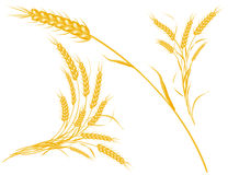 Wheat, model with EPS file stock photos