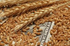 Wheat and money. Wheat and dollar banknote in close up Royalty Free Stock Images