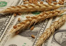 Wheat and money. Wheat and dollar banknote in close up Stock Photography