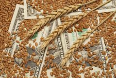 Wheat and money. Wheat and dollar banknote in close up Stock Image