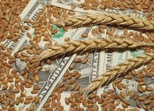 Wheat and money. Wheat and dollar banknote in close up Stock Photos