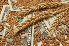 Wheat and money. Wheat and dollar banknote in close up Royalty Free Stock Photos