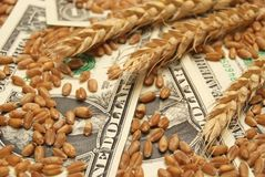 Wheat and money. Wheat and dollar banknote in close up Stock Images