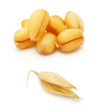 Wheat and oat grain isolated Stock Images