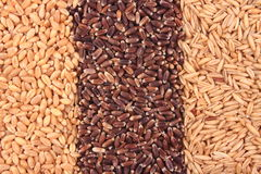 Wheat, oat kernel and oat rice Royalty Free Stock Photos