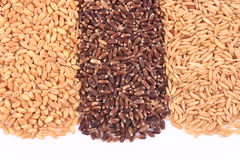 Wheat, oat kernel and oat rice Royalty Free Stock Photo
