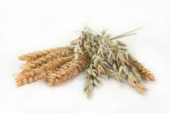 Wheat and oats Royalty Free Stock Image