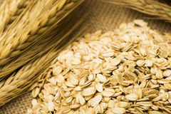 Wheat and oats on the burlap Stock Images