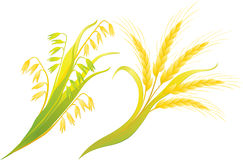Wheat and oats ears. Autumn harvest, wheat and oats ears royalty free illustration
