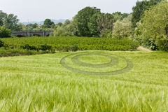 Wheat ocircle. Mysterious round circle in wheat field Stock Photography