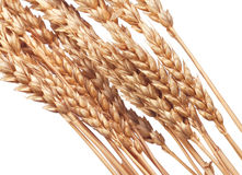 The Wheat Stock Images