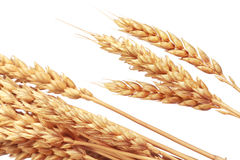 The Wheat Royalty Free Stock Image