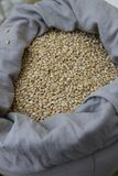 Wheat. Organic wheat grains in a sack. Selective focus royalty free stock photography