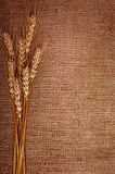 Wheat over the canvas Stock Images