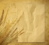 Wheat on paper Royalty Free Stock Photography
