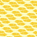 Wheat pattern. Illustration of the wheat pattern on the white background Stock Images