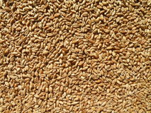 Wheat pattern Stock Images