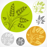 Wheat pattern in round Stock Images