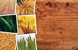 Wheat photo collage. Wheat farming photo collage on wooden background as copy space royalty free stock photo