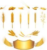 wheat photo-realistic set Stock Photo