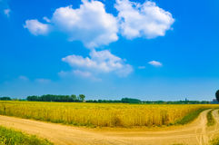 Wheat plant meadow Stock Image