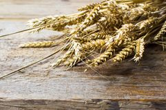 Wheat plant on a wooden table. Close up Royalty Free Stock Photography