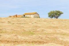 Wheat plantation farm and cork trees in Vale Seco, Santiago do C. Acem, Alentejo, Portugal Stock Image