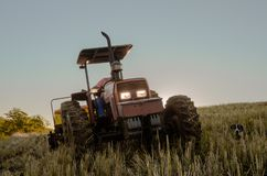 Wheat planting, agriculture, man of the field stock photos