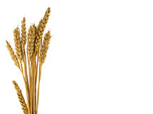 Wheat plants isolated on white Royalty Free Stock Photo