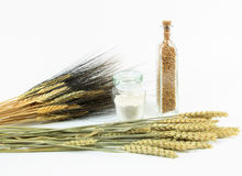 Wheat plants and products. Stock Image