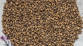 Wheat in a plate Stock Image