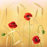Wheat and poppy Stock Images
