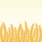 Wheat Post Card with Place for Text Royalty Free Stock Photos