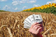Wheat Prices or Agriculture Business Concept stock image