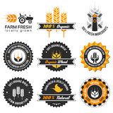 Wheat production label set Stock Photos
