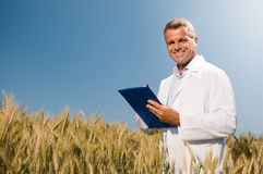 Wheat quality control. Happy mature technician checking the growth of the wheat for a quality control in a cereal field in summer Royalty Free Stock Image