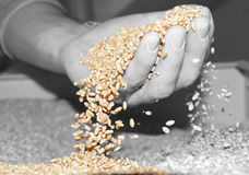 Wheat rain Royalty Free Stock Images