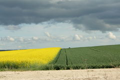Wheat and field in spring. Wheat and field in Aisne, Picardie region of France stock photography