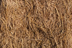 Wheat residues background Royalty Free Stock Photography