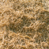Wheat residues background Royalty Free Stock Photo